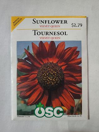 Sunflower - Velvet Queen