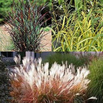 Perennial Grass Combo