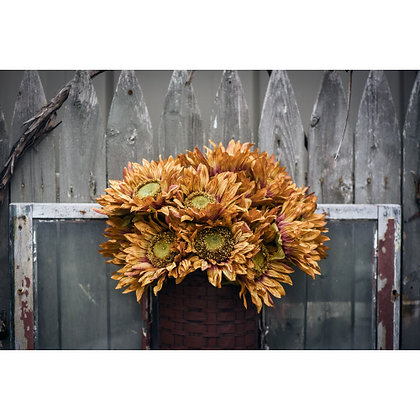 """26"""" Red and Brown Sunflower Stem"""