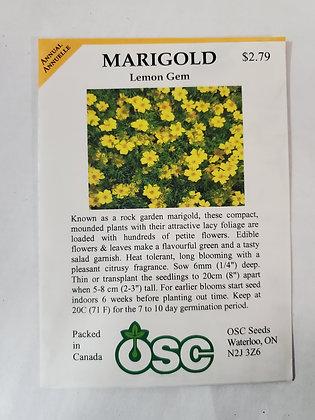 Marigold - Lemon Gem