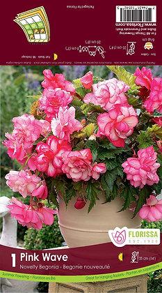 Pink Wave Begonia