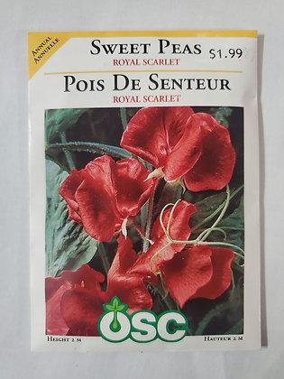 Sweet Peas - Royal Scarlet