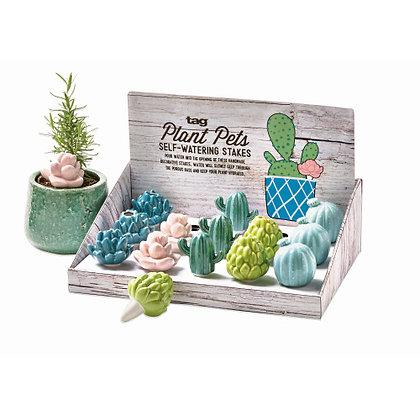 Succulent Plant Pets