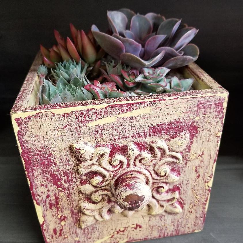 Paint & Plant Succulent Class