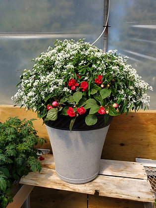 Euphorbia/Double Impatiens Planter