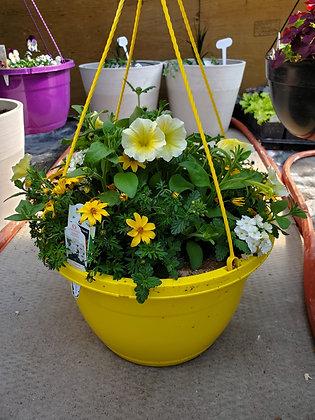 Petunia/Verbena/Bidens Hanging Basket