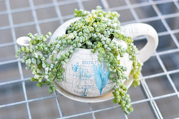 Teapot Artificial Succulent Arrangement