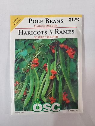 Pole Beans - Scarlet Runner