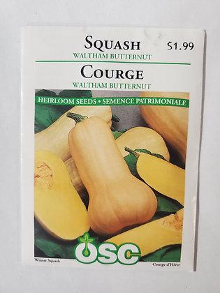 Squash - Waltham Butternut