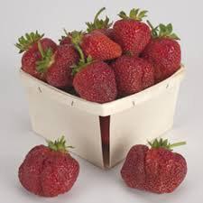 Cavendish Strawberry