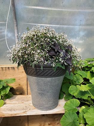 Potatoe Vine/Euphorbia/Angelonia Planter