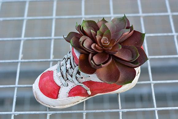Red Shoe Artificial Succulent Arrangement