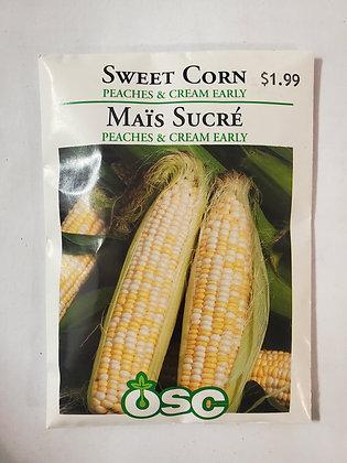 Sweet Corn - Peaches & Cream Early