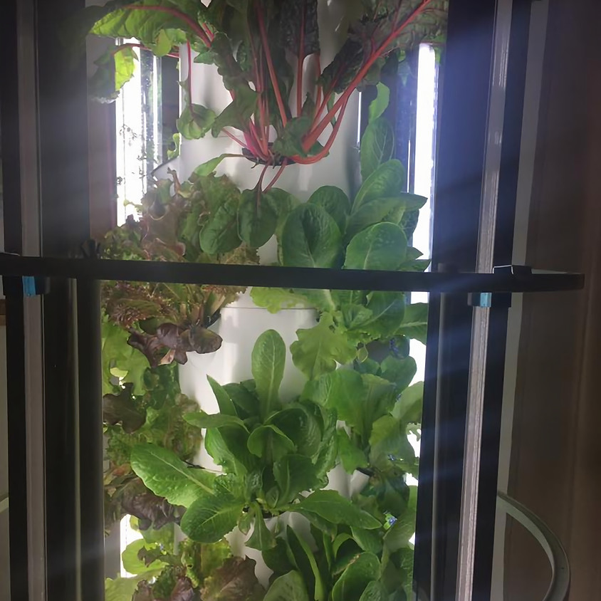 """How to Grow with the """"Tower Garden"""""""