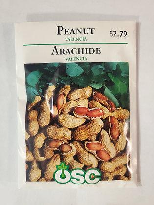 Peanut - Valencia