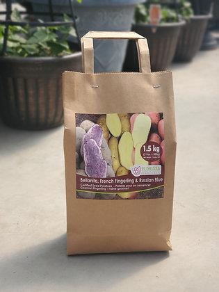 Seed Potato Combo