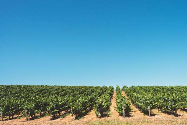 WA vineyards