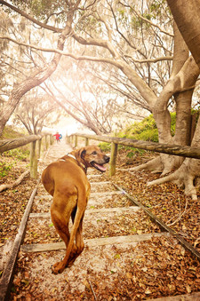 happy dog walking down to beach