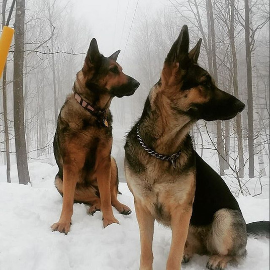 Sierra and Greta are looking for spring!