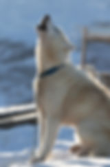 Greenland 2019_Stuart Holmes -72.jpg