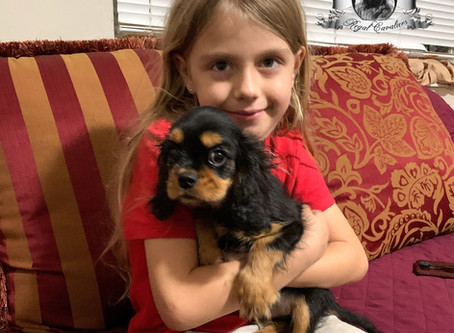 Top Tips for Bringing a Cavalier King Charles Spaniel Puppy Home