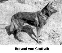 The first registered German Shepherd