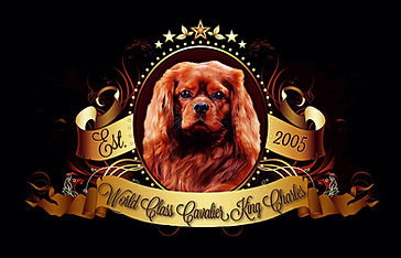World Class Cavalier King Charles Spanie