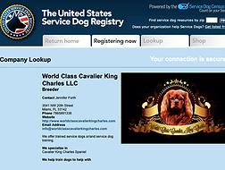 Cavalier King Charles Service Dog.png