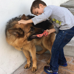 Safety tips for Children and Dogs