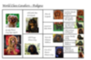 Blue Pedigree frame 2.jpg