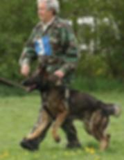 Ares Rebelling IPO1, BH, KKL1, AKC, FCI, KSS German Shepherd dog