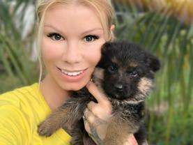 German Shepherd breeder Florida