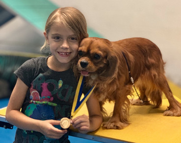 World Class Cavaliers, Cavalier King Charles Spaniel breeder in Florida