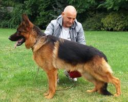 Quoran Von Bellissimo German Shepher