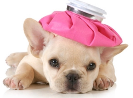 CAN I GIVE MY DOG A COLD?