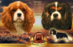 Cavalier King Charles Spaniel breeder World Class Cavaliers