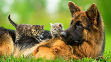 Spring Tips for your German Shepherd Dog and Puppy