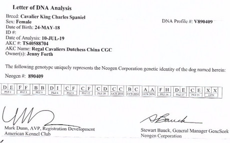 China DNA profile