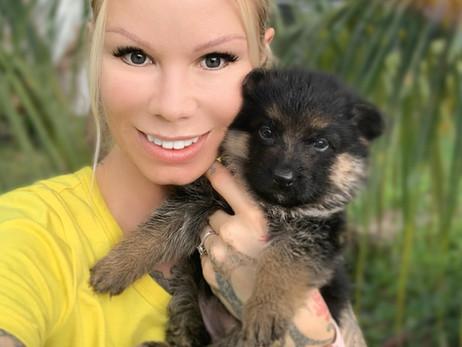 Tips For Grooming Your German Shepherd Dog