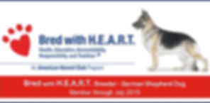AKC Bred with heart German Shepherd