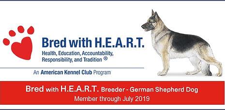 AKC Bred with heart German Shepherd