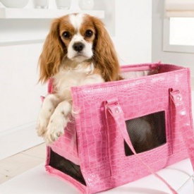 Cavalier King Charles shipping with nanny