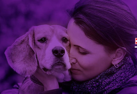 Purple Leash Project - Domestic Violence & Pets