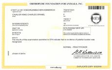 OFA patellar certificate C'est La Vie Vom Erlenbacher-Hemmerich