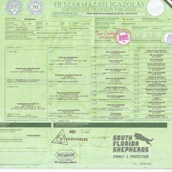 Zornig Gino SG IPO1 BH KKL1