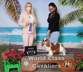 World Class Cavaliers, Cavalier King Charles Spaniel breeder in Florida