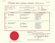 ckcsc World Class Cavaliers Mighty Tchamp Von Schwab