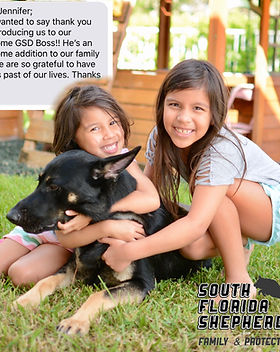 South Florida German Shepherd testimonia