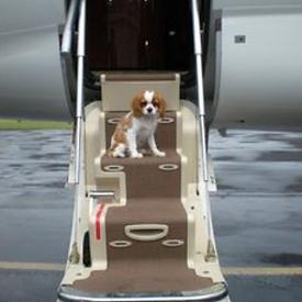Puppy flight service