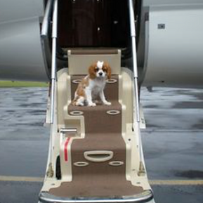 Puppy flight service